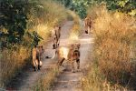 Gir sanctuary to remain closed for animal breeding season
